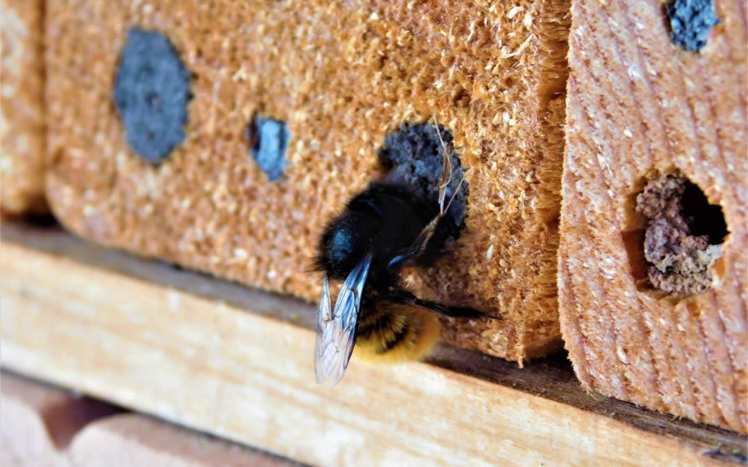 Services from Snowball Pest Control to get rid of Carpenter Bees